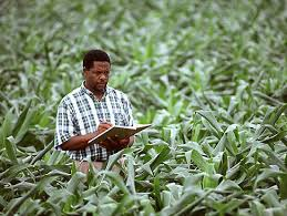 AG Plant Science for Transfer AS T Degree and Certificate   Learning and Career Pathway